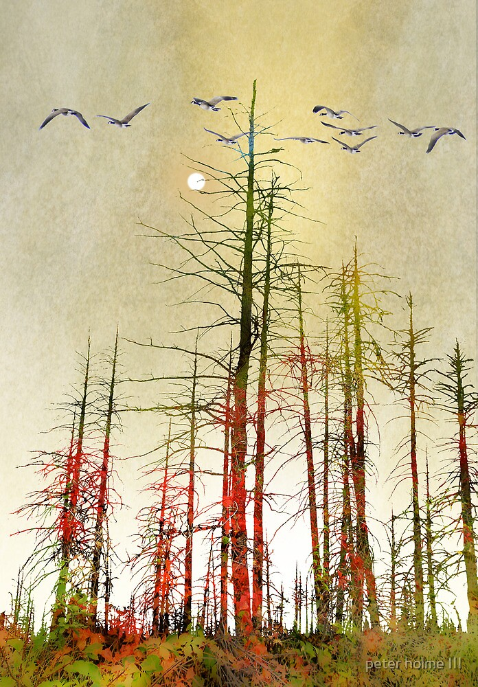 2767 by peter holme III