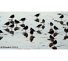 Birdflections! Photographic Print