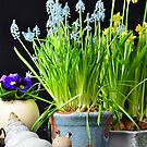 Easter flowers an a snail by 7horses