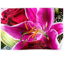 Blooming Day Lily Poster