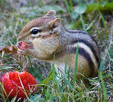 Strawberry Chipmunk by David Warrington