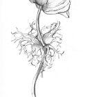 Anemone by Barbara Wyeth