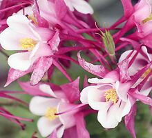 Unique Pink Flowers by Jennifer Totten