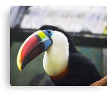 Toucan - An oddly happy bird Canvas Print