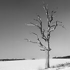 Dead tree in Winter by Mark Cass