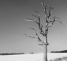 Dead tree in Winter by Mark Cass