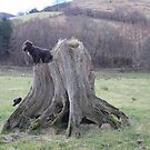 Dogs And Stump by Abigail Jennings