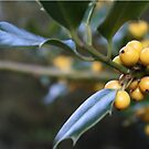 Yellow Holly Berries by gyp1gyp1y