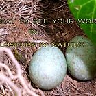 Closeups in Nature Banner design by Heidi Mooney-Hill