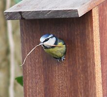 Spring Cleaning.........Bluetit by Rivendell7