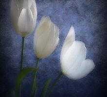 Tulips in the Blue by WishesandWhims