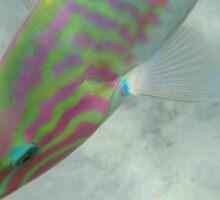 Fishy in the sea Sticker