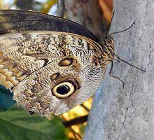 Butterfly by Jennifer Totten