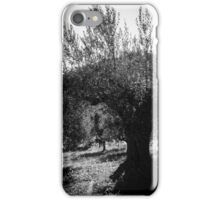 Olive trees in Italy  iPhone Case/Skin