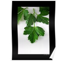 Petroselinum Crispum - Fresh Garden Parsley Poster