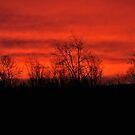 Dawn's Blaze by LavenderMoon