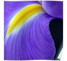 Purple Iris Abstract Poster