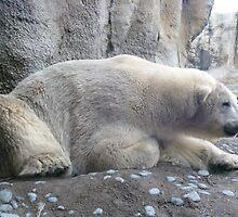 Eric the polar bear by Caroline Clarkson