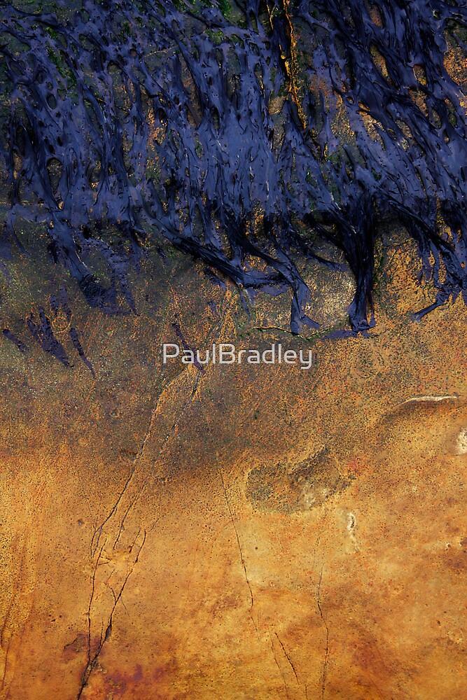 Magnesian Limestone by PaulBradley