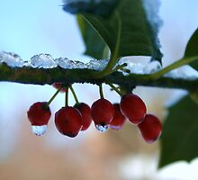 holly berries on ice by robingailwood
