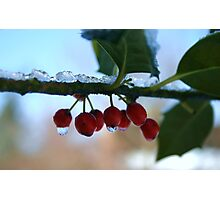 holly berries on ice Photographic Print