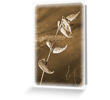 Milkweed Seed Pod Greeting Card
