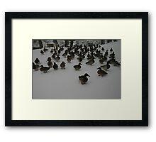 ducks in winter Framed Print
