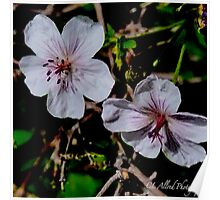 Wild Blossoms Poster