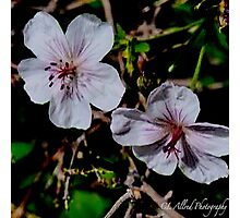 Wild Blossoms Photographic Print