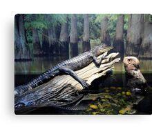 'Gator At Delta Rivers Canvas Print
