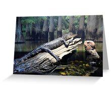 'Gator At Delta Rivers Greeting Card