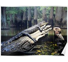 'Gator At Delta Rivers Poster