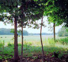 Appleton Farms, MA, August 2012 by jenjohnson1968