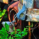 Old truck hood latch by joevoz