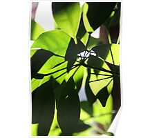 Green Leaves in Sun Poster