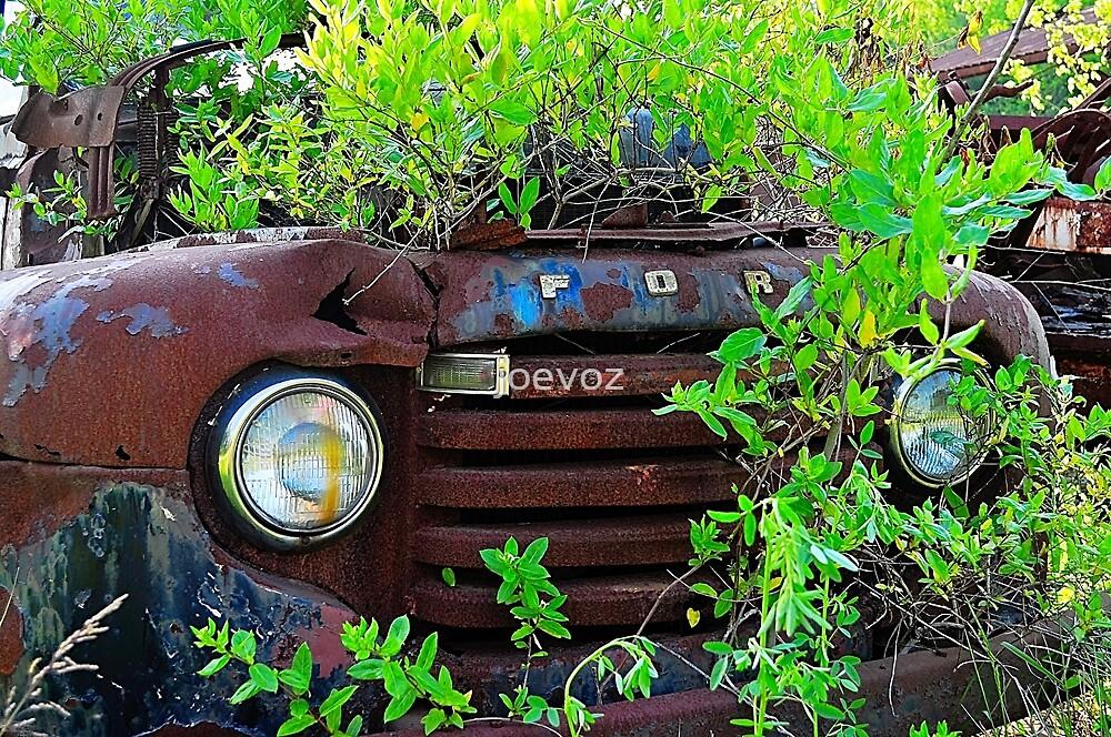 Truck in the bush by joevoz