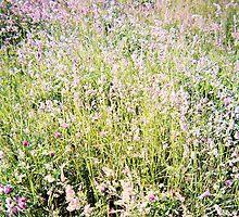 Fields of Clover, Belle Isle Marsh, May 2012 by jenjohnson1968