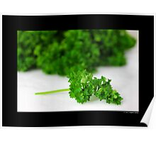 Petroselinum Crispum - Garden Parsley Poster