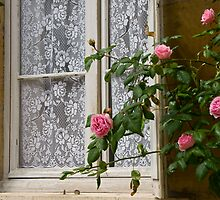 Floral Window by Caylena Cahill
