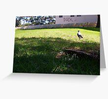 Stalking Magpies - Big Men Don't Duck - 17 03 13 Greeting Card