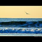 Seagull In Flight Over Atlantic Ocean Waves - Smith Point, New York by © Sophie W. Smith