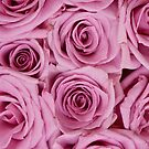 Southern Belle - pink roses by Jenny Dean