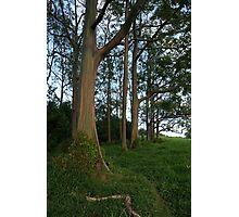 Rainbow Eucalyptus Photographic Print