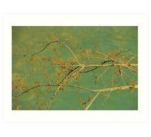 Spice Bush Art Print