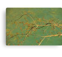 Spice Bush Canvas Print