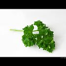 Petroselinum Crispum - Organic Garden Parsley Leaf by © Sophie Smith