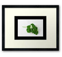 Petroselinum Crispum - Organic Garden Parsley Leaf Framed Print
