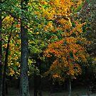 Murphysboro Lake (9) by michaelasamples