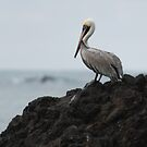 Brown Pelican by Mark Prior