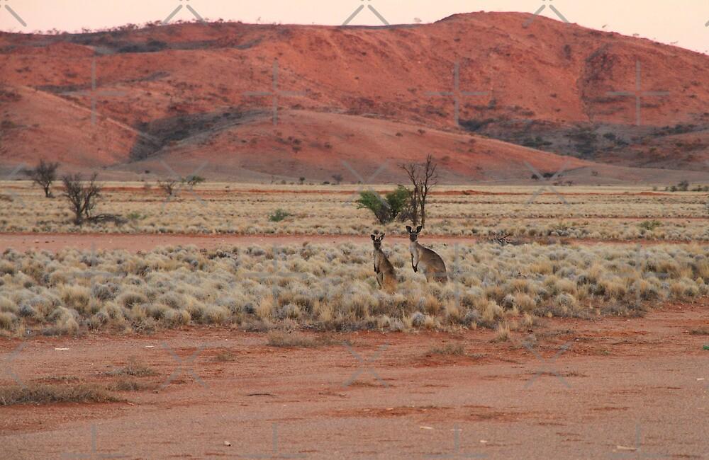 Two Kangaroos by darkydoors